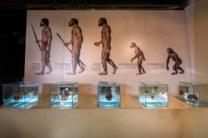 Первобытные люди делили животных на мясных и «оружейных»