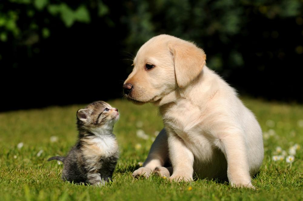 В США предлагают запретить есть кошек и собак