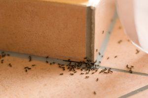 Они повсюду: в каждом доме живет 100 видов насекомых