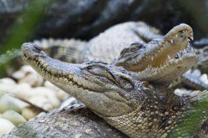 Пожилой француз держит дома 400 рептилий
