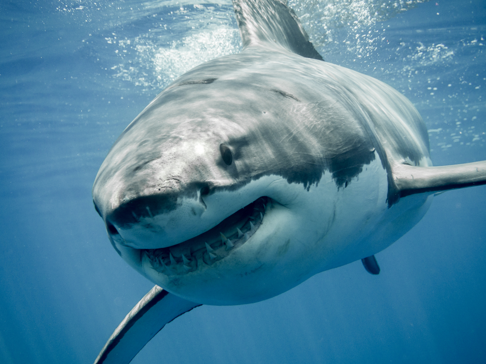 Морские биологи обнаружили тайное убежище акул в Тихом океане