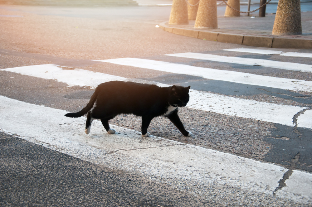 В Италии монахиня попала в аварию из-за суеверий