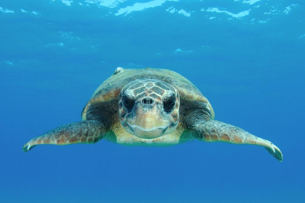 Капитан Джун и ее черепахи: как британка 30 лет спасает рептилий в Турции