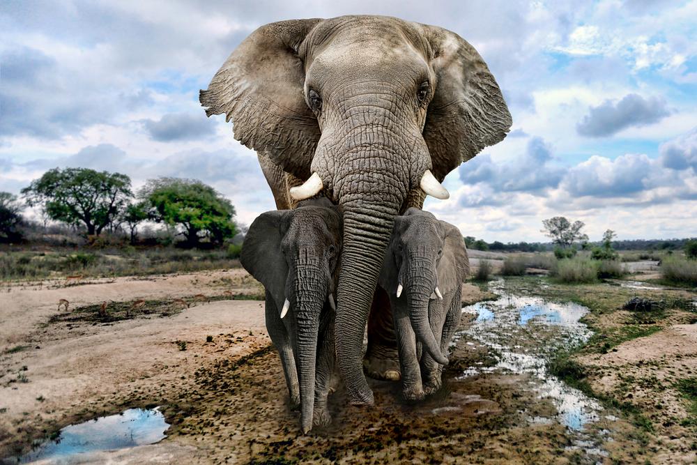 В Ботсване нашли почти сотню убитых слонов