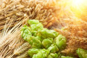 В Израиле нашли древнейшее пиво
