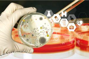 В кишечнике найдена бактерия, производящая электричество