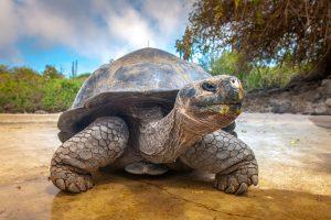 Большинство видов черепах уже вымерли. Остальные скоро исчезнут
