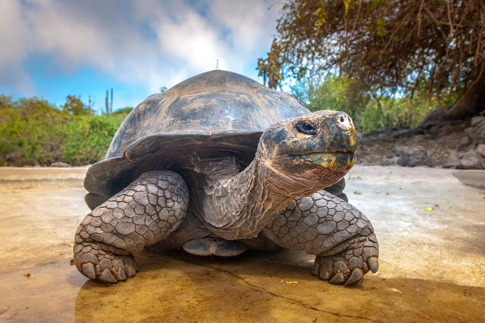 Большинство видов черепах уже вымерли. Остальные скоро исчезнут.Вокруг Света. Украина