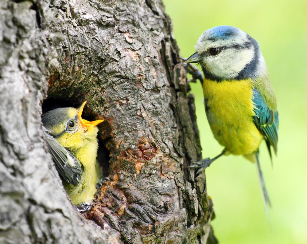 Отрава для птиц: личинки насекомых питаются микропластиком
