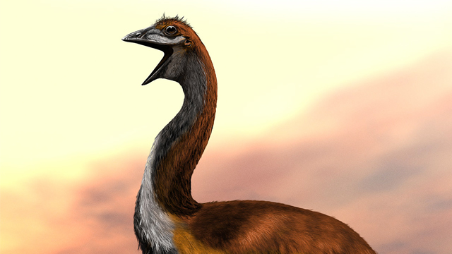 Зоологи опознали самую большую вымершую птицу в мире