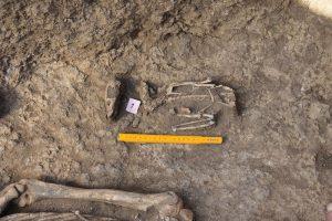 На Херсонщине нашли уникальное захоронение человека и уток