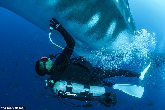Морские биологи сделали УЗИ китовой акуле.Вокруг Света. Украина