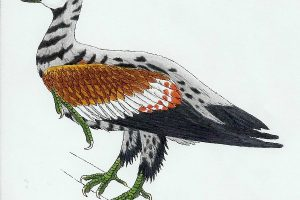 Ученые обнаружили останки птицы, жившей 120 млн лет назад