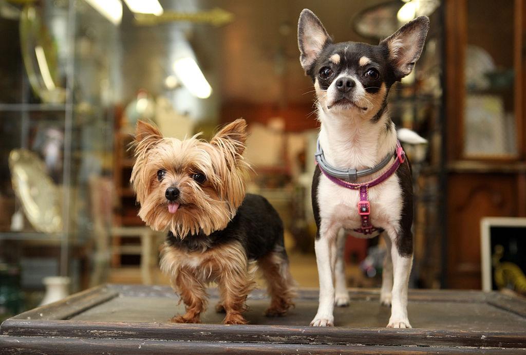 В Бангкоке разрешили приходить на работу в офис с собаками