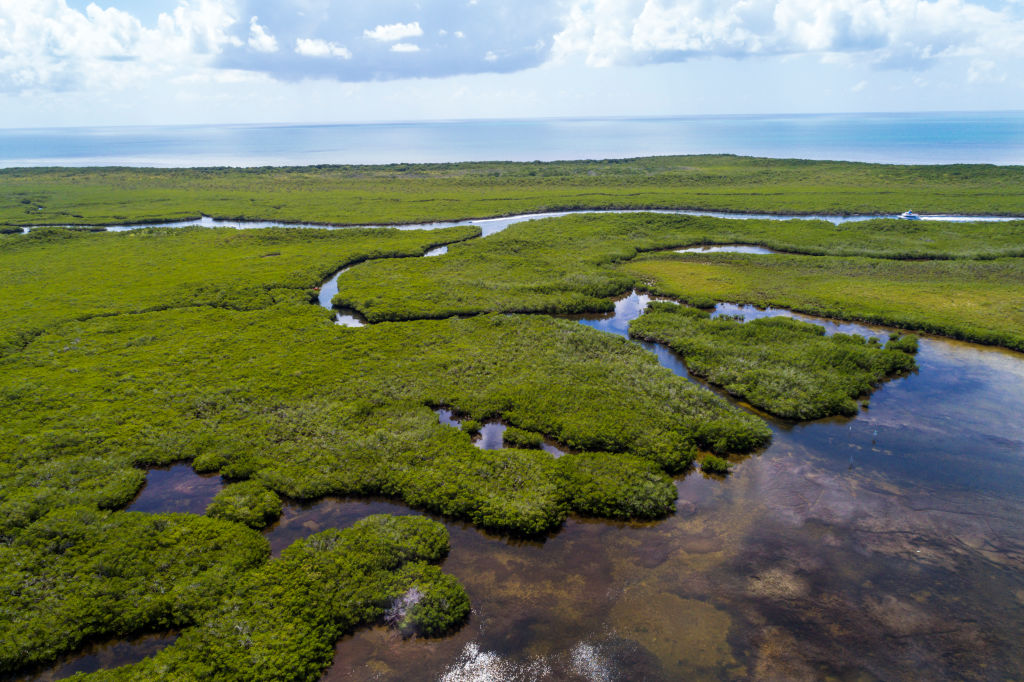 Инженеры экосистем: как мангровые заросли сражаются с изменениями климата.Вокруг Света. Украина