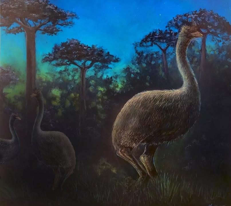 Самая большая в мире птица-слон была почти слепой: ученые