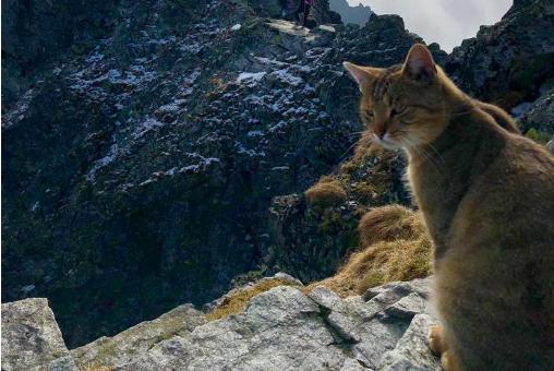 Кота-скалолаза обнаружили на высочайшей вершине Польши