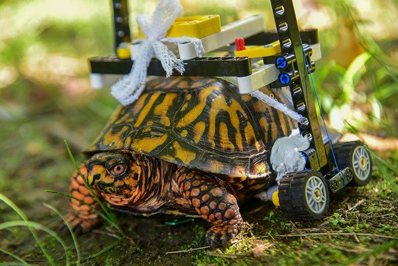 Врачи сделали из конструктора LEGO инвалидную коляску для черепахи