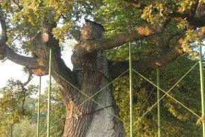 В Украине стартовала акция по высадке деревьев, которые «помнят Шевченко»