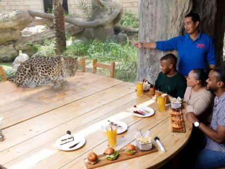 В зоопарке Абу-Даби можно пообедать в компании леопарда