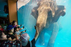В Таиланде закрывают зоопарк, где плавают слоны