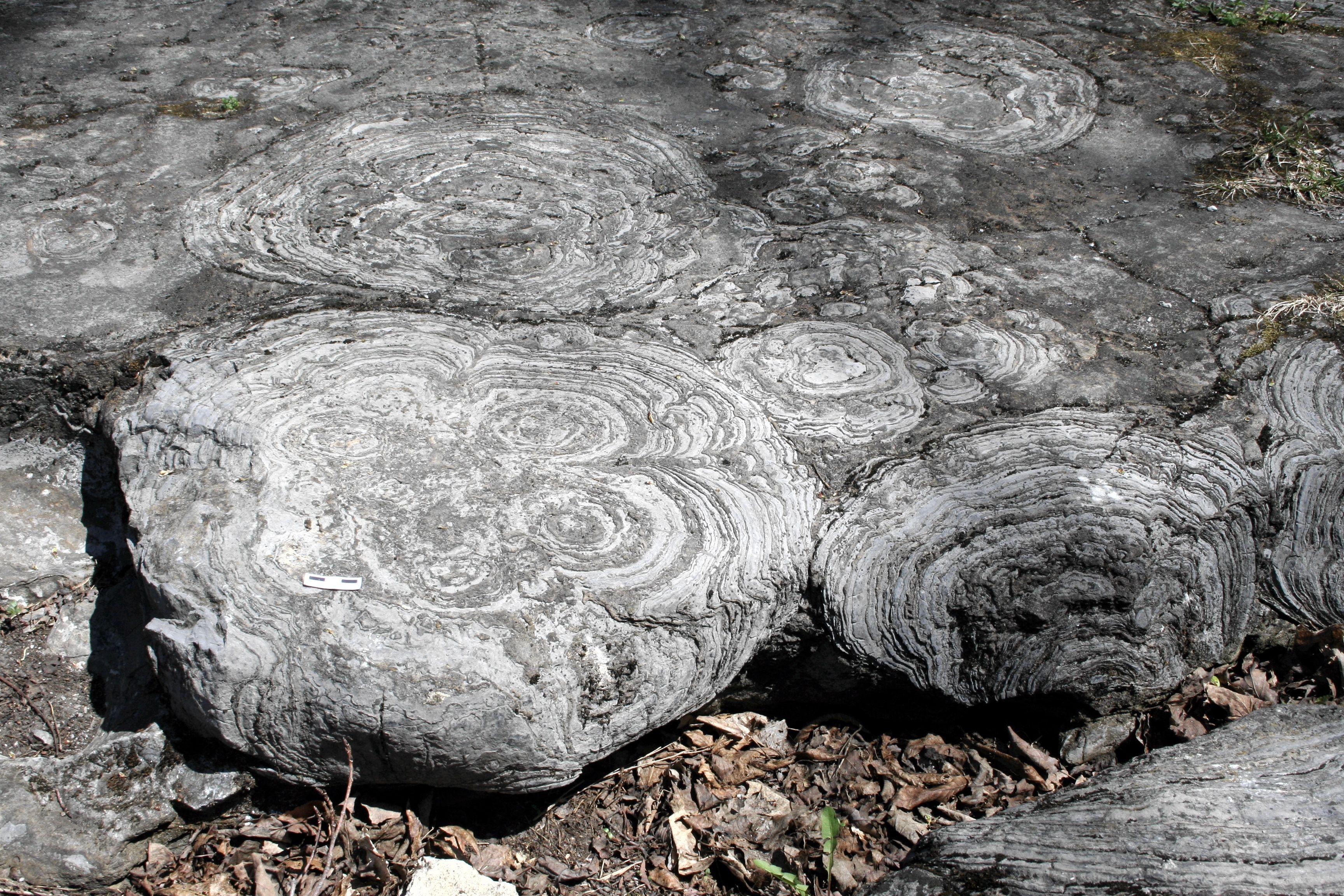 Древнейшие окаменелости на Земле оказались просто камнем