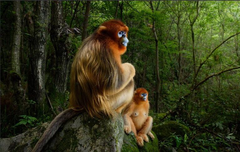 Фотограф-натуралист 2018 года: названы победители престижного конкурса
