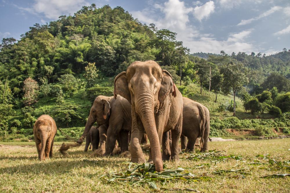 Земле понадобится 5 миллионов лет, чтобы возродить виды, вымершие за полстолетия