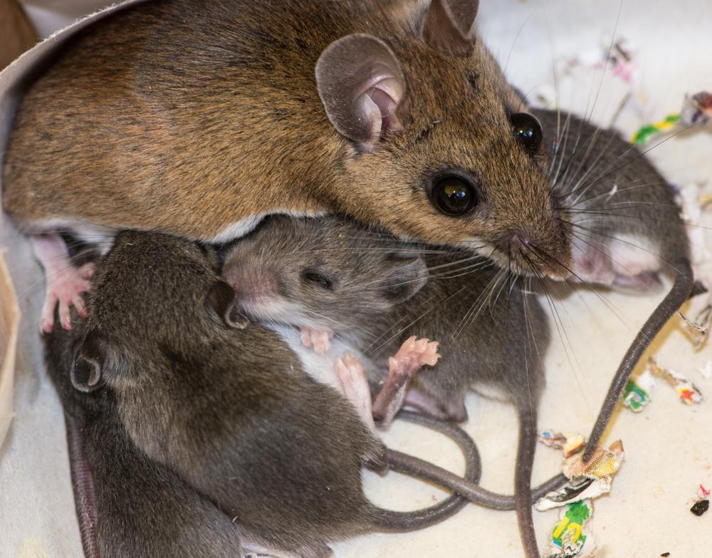 Ученые получили потомство от двух самцов.Вокруг Света. Украина