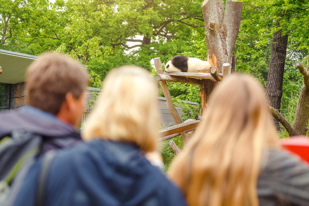 В Китае туристам запретили фотографироваться с пандами.Вокруг Света. Украина