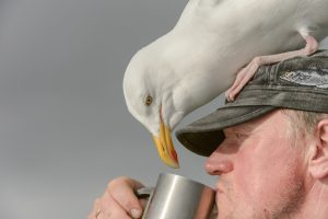 В США пьяные птицы стали причиной беспорядков