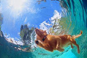 В Сербии прохожий с риском для жизни спас собаку