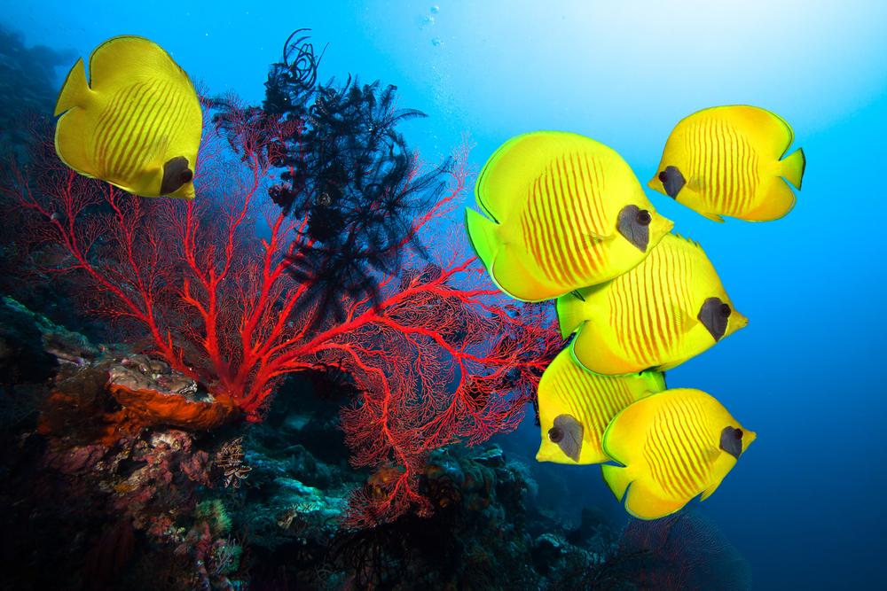 На Мальдивах появились коралловые рифы, напечатанные на 3D-принтере