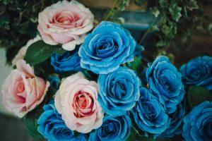 Китайские ученые заставили розы посинеть