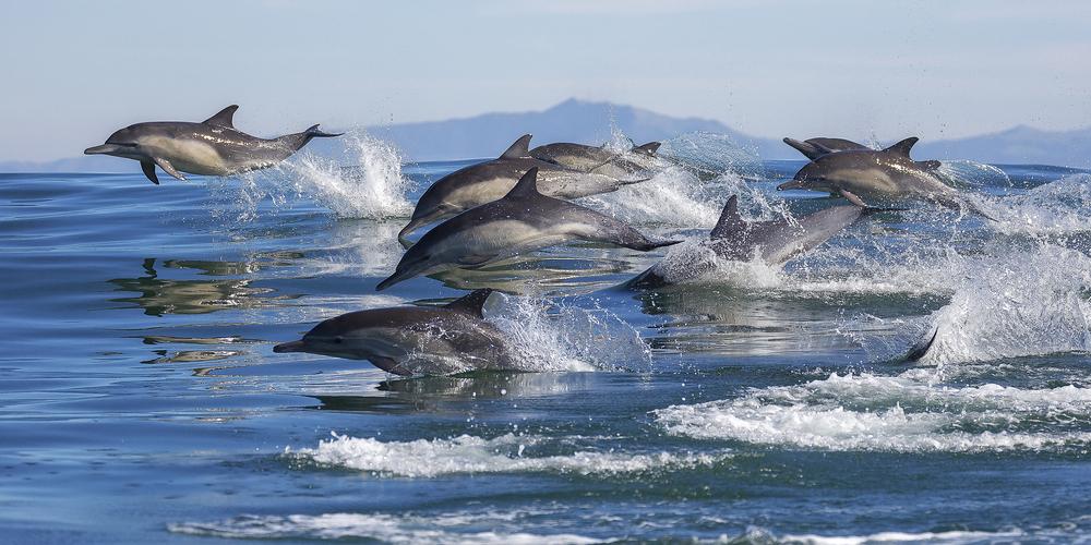 Дельфины не слышат друг друга, потому что люди слишком шумят
