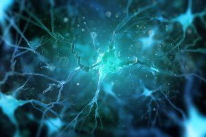 Каждая клетка человеческого мозга работает как миникомпьютер: ученые