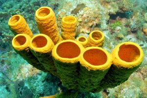 Антибиотик, способный убить самые стойкие инфекции, нашли на дне океана