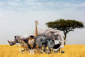 За последние 40 лет человечество уничтожило 60% диких животных: отчет WWF