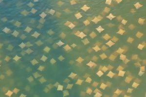 «Осенний листопад»: во Флориде началась миграция скатов