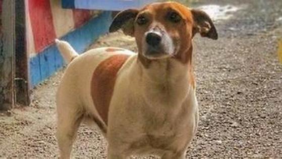 Итальянская мафия охотится на полицейского пса