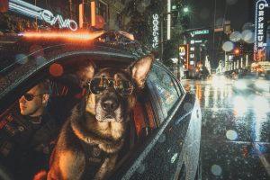 Полиция Ванкувера выпустила календарь служебных собак