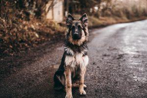 Чем лучше кормить собак и кошек, чтобы они не болели?
