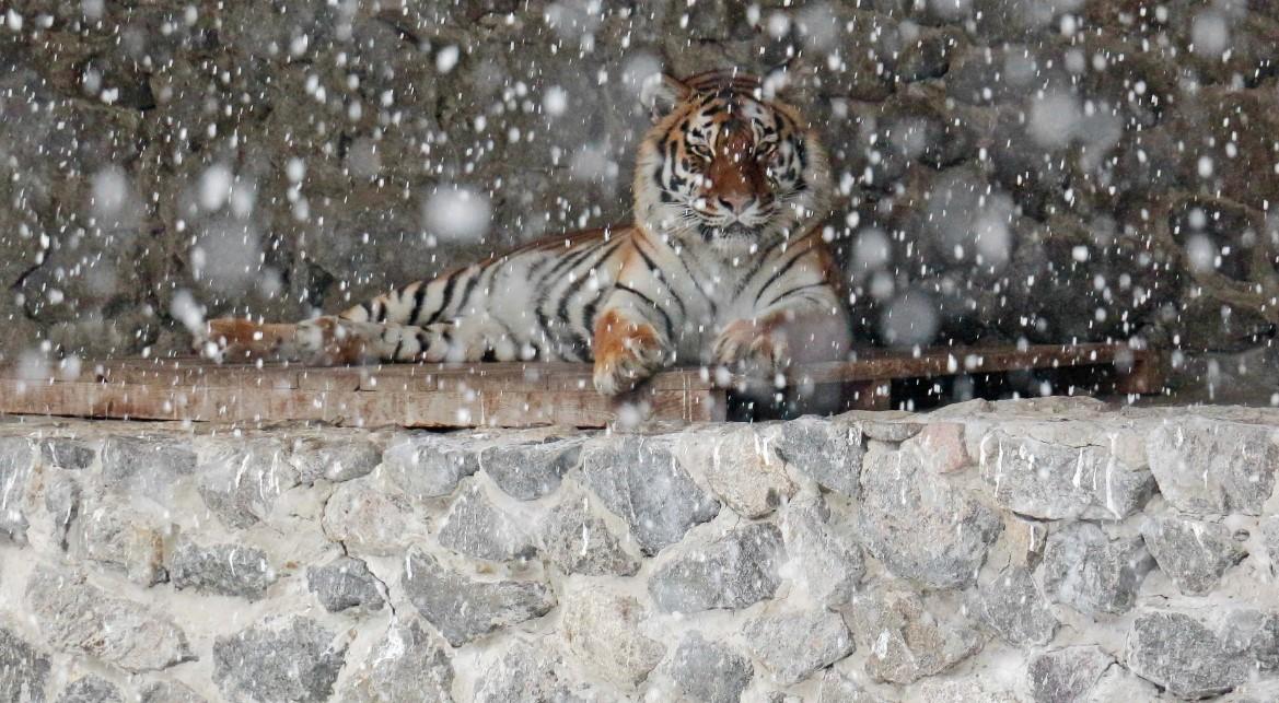 Животные в Киевском зоопарке встретили зиму