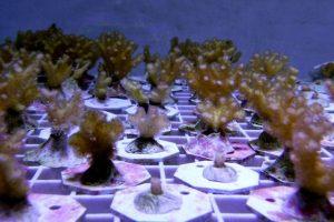 Биологи обнаружили уникальные иммунные гены у кораллов
