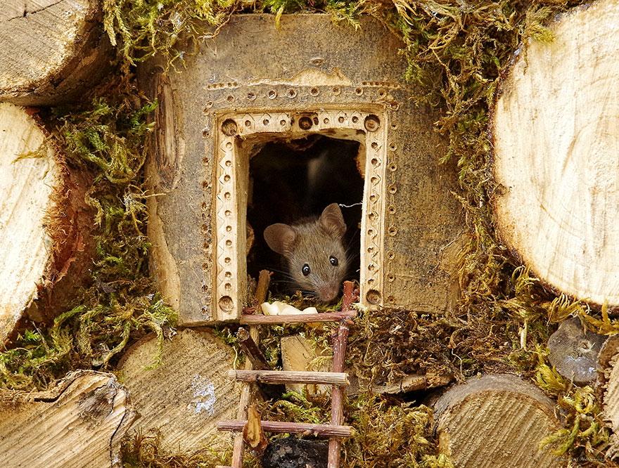 Британский фотограф построил садовым мышам деревню