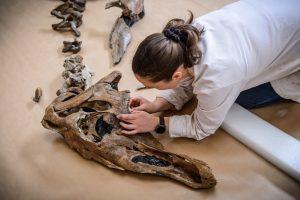 Палеонтологи открыли новый вид динозавров
