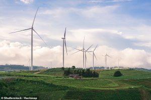 Ветряные электростанции уничтожили 75% хищных птиц