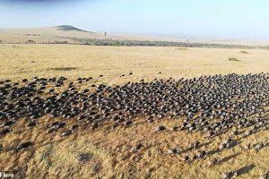 Турист снял миграцию антилоп в Кении с воздушного шара (видео)