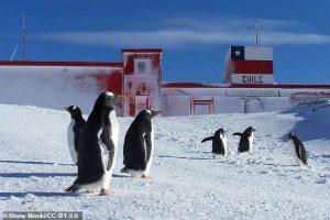 Устойчивые к антибиотикам микробы нашли у пингвинов