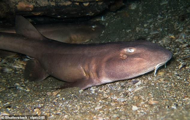 Океанологи подсмотрели за жизнью эмбриона кошачьей акулы.Вокруг Света. Украина